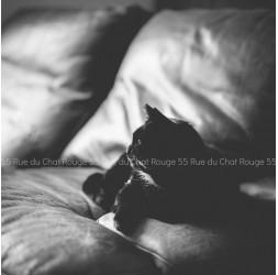 Photographie Chat Noir