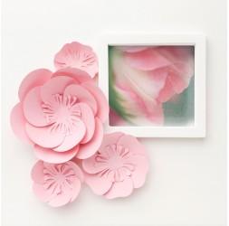 Photographie Tulipe rose et blanche