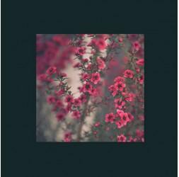 Photographie Arbuste fleuri Fushia